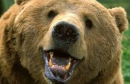 Guess Who is Coming to Dinner? Russian Couple Lives With 7-Foot Bear