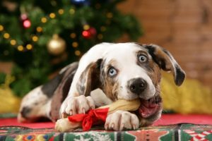 hilarious-christmas-dog-picture