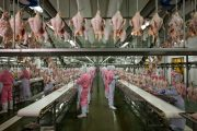 National Geographic:  How China Plans to Feed 1.4 Billion Growing Appetites