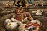 National Geographic:  Hundreds of Pterosaur Eggs Found in Record-Breaking Fossil Haul